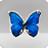 bkViewer 照片浏览器