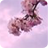 Win7官方主题-日本樱花