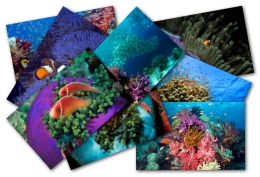 Win7官方主题-热带鱼